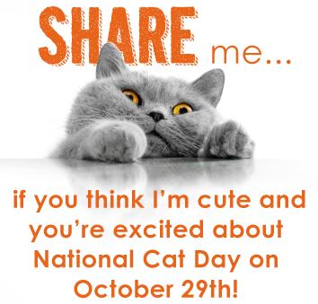 it 39 s national cat day october 29th commerce village veterinary hospital. Black Bedroom Furniture Sets. Home Design Ideas
