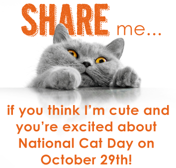 It S National Cat Day October 29th Commerce Village Veterinary Hospital